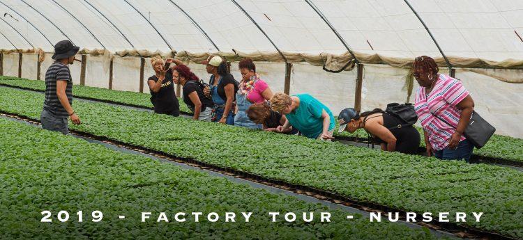 cigar-factory-tour-nursery